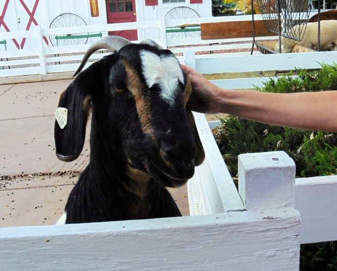 This goat likes Soapy's mom