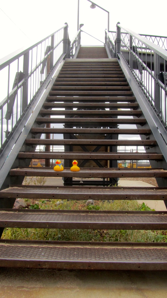 Too many stairs for ducks to climb