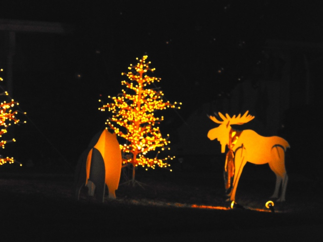 A Colorado Christmas moose.