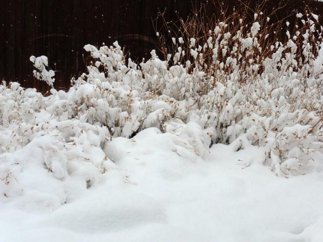 Fresh white snow