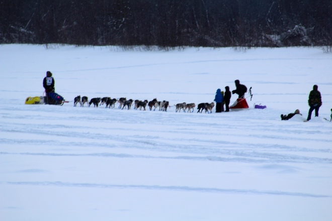 Dog team and sled