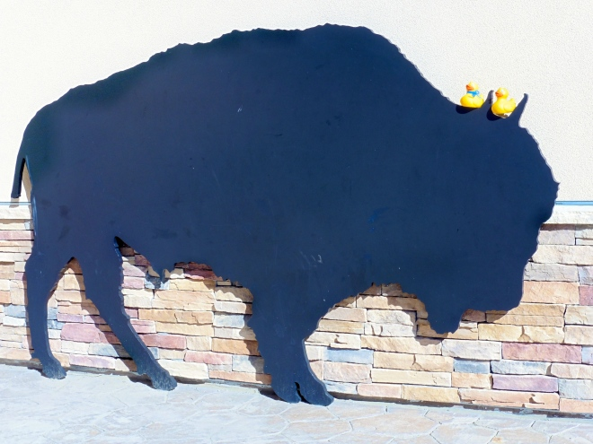 Ducks can touch this buffalo