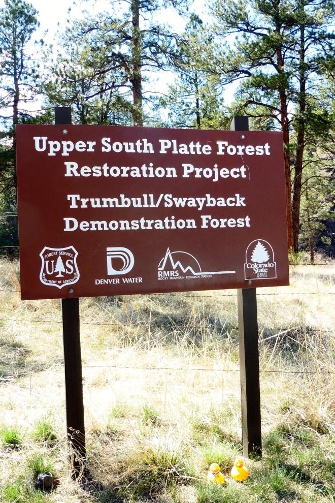 Upper South Platte Forest Restoration Project
