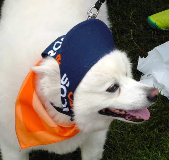 This dog is a Bronco fan!