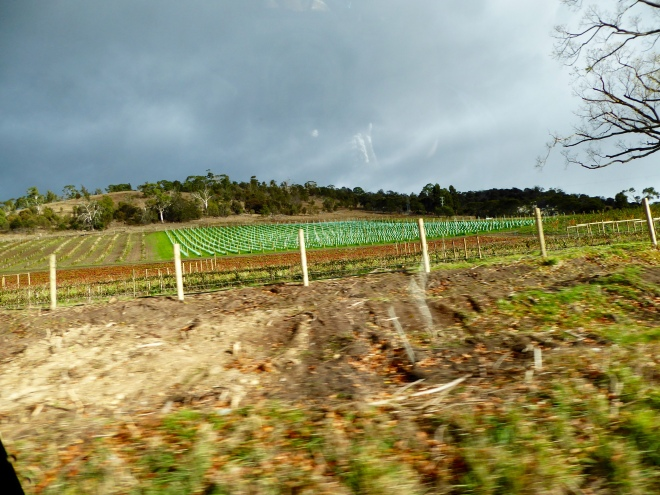 Vines cut back for winter