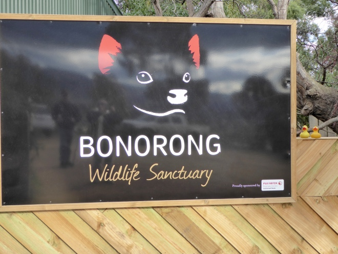 We loved Bonorong Wildlife Sanctuary in Tasmania