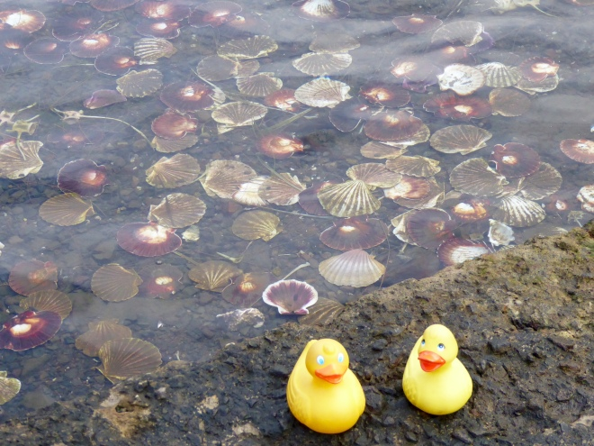 Look at these shells