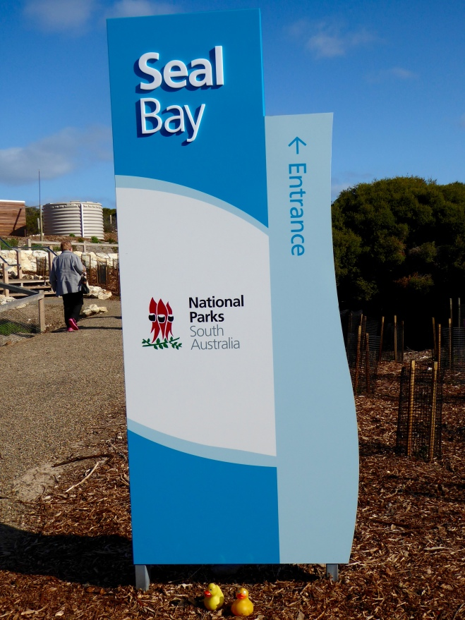 Seal Bay is part of a National Park