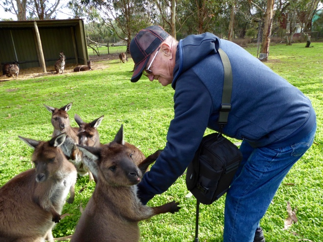 These kangaroos like humans