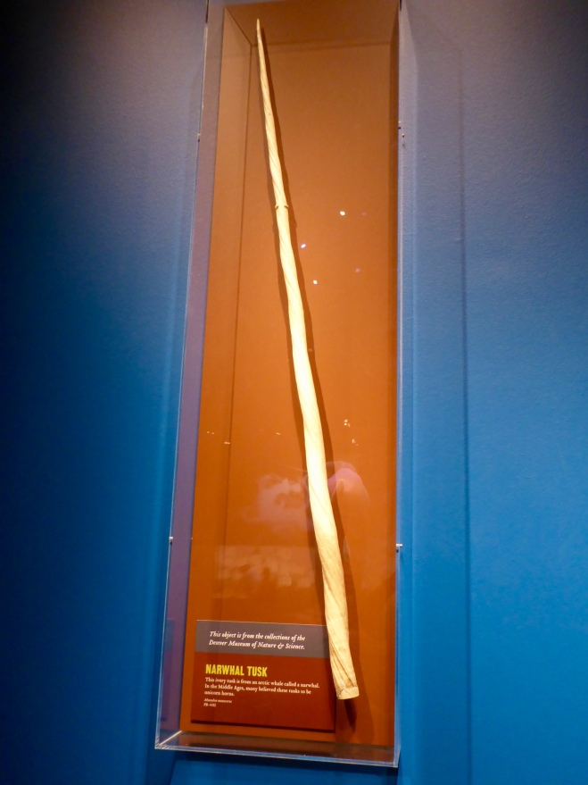 Narwhal Whale Tusk