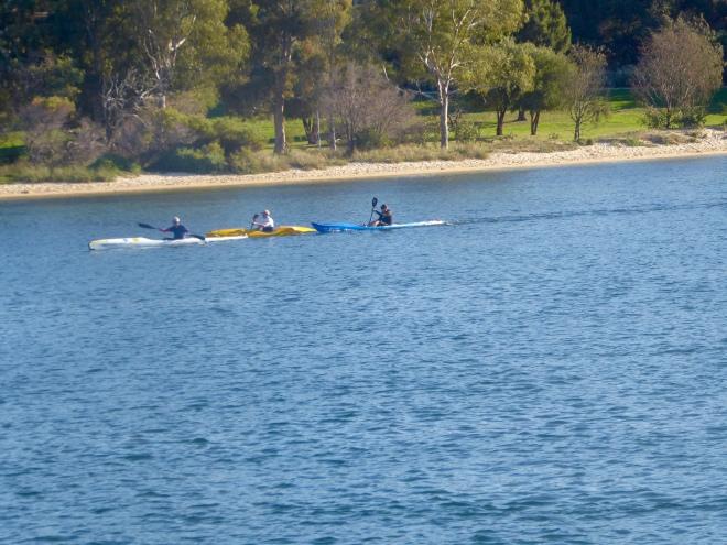 So many kayaks