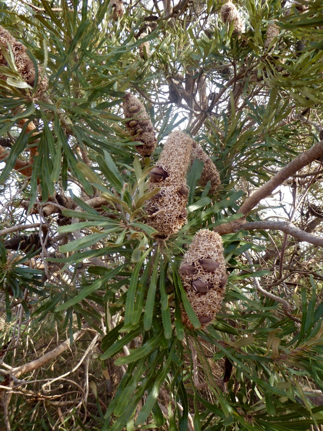 Unusual seed pods