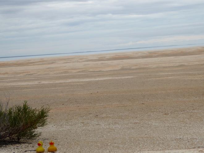 Shell Beach is huge