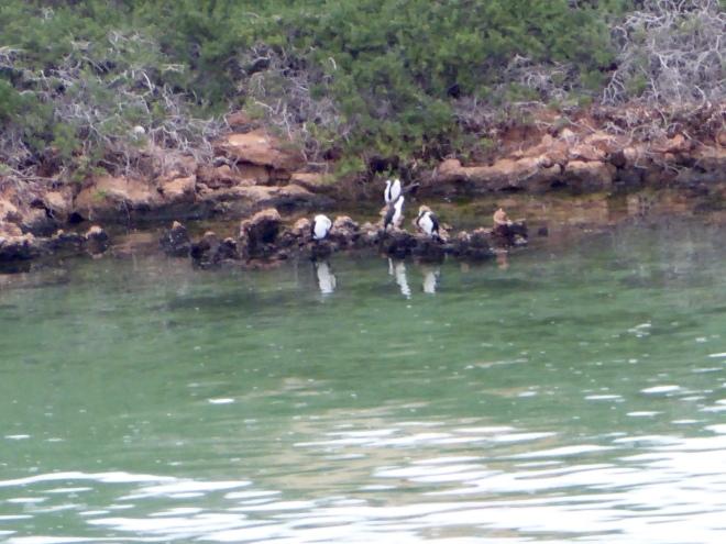 Island primarily breeding area for birds