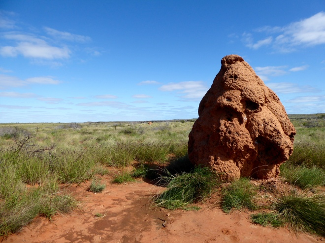 Big, lumpy termite hill