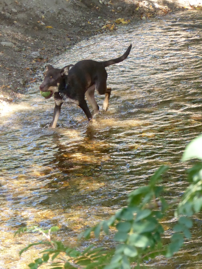 Humans and dogs love Boulder Creek