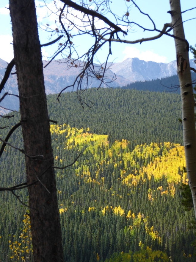 Through the trees we admire aspen and rocky mountains
