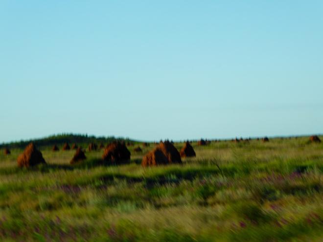 More termite hills