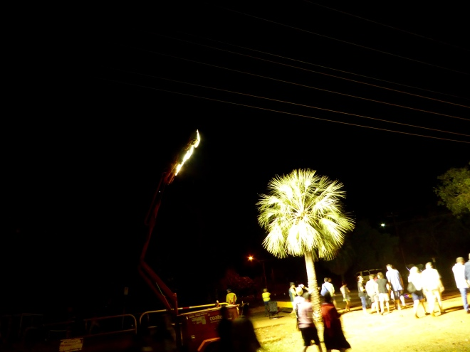 Flood lights on a palm tree