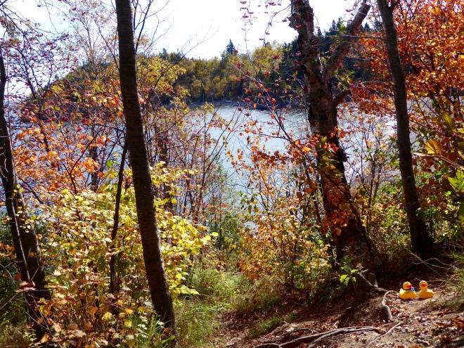 Lake Superior through the trees
