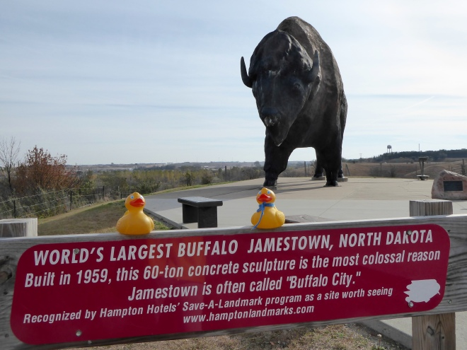 A really big buffalo