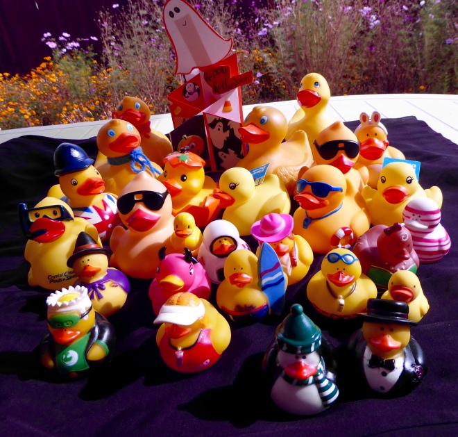 Thanks to all that helped our duck family grow
