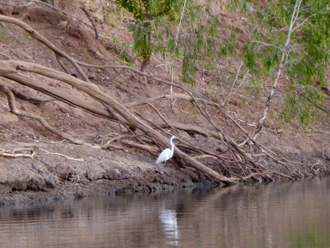 Calm bird on river bank and reflected in river