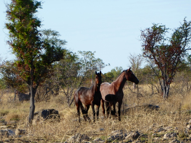 Horses by the ride to Tunnel Creek National Park