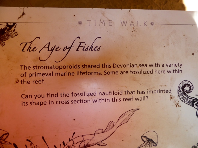 Why fish fossils in the walls