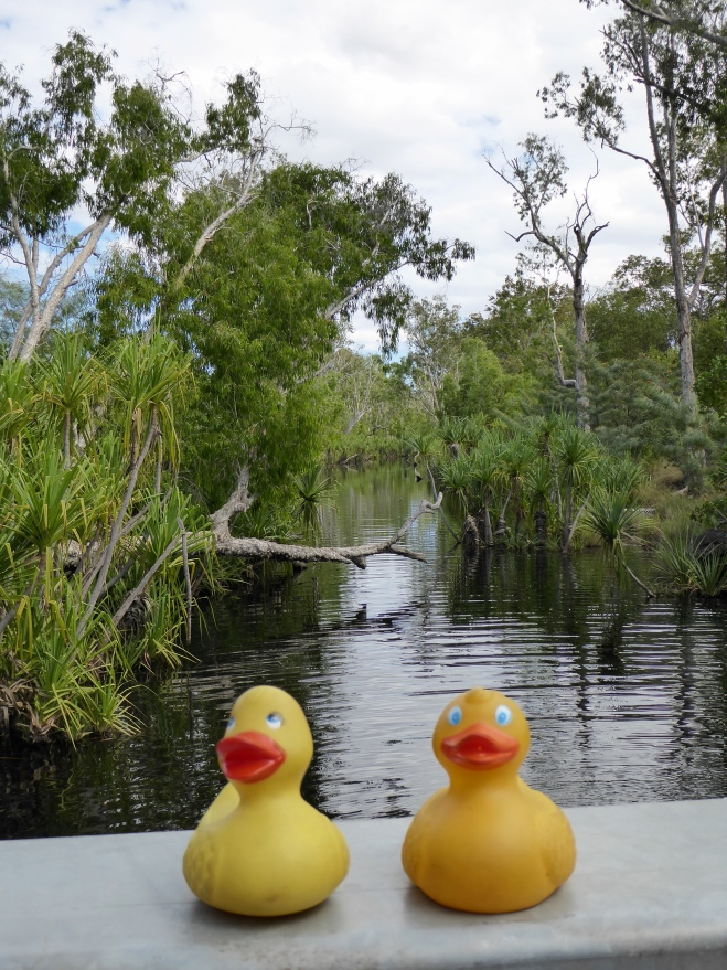 Edith Falls feeds this serene river
