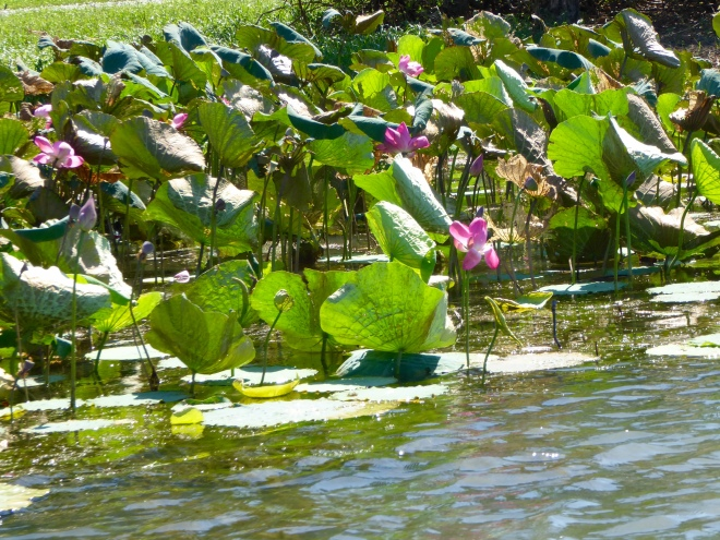 We like lily pads and bright flowers