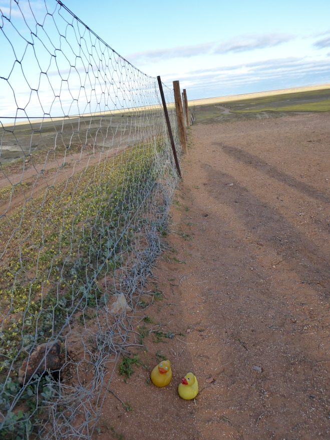 We are at the Dingo Fence