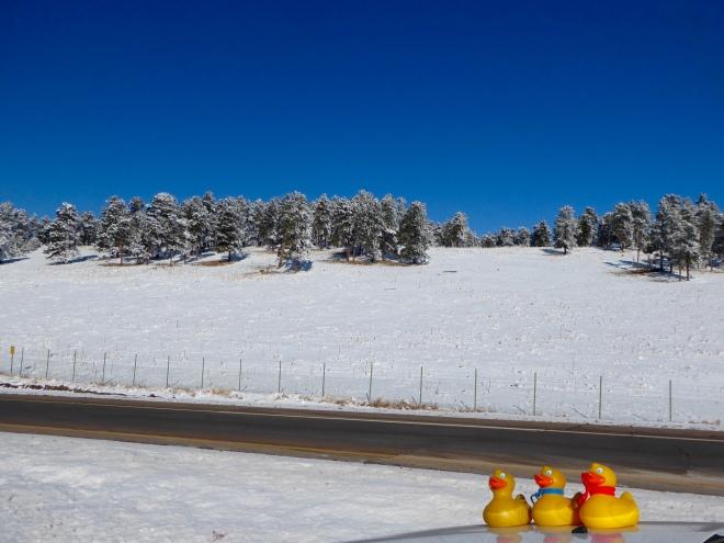 Snowy trees and bright blue Colorado sky