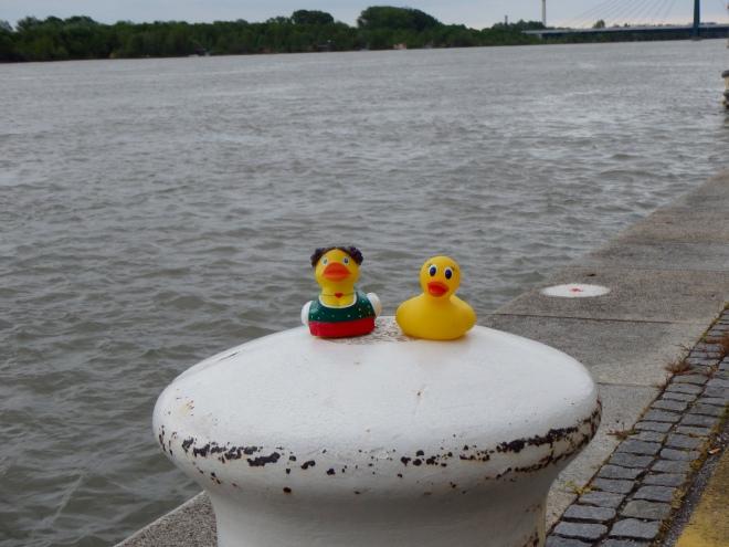 Danube River in Vienna