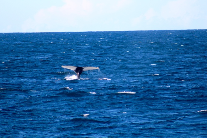 Tail of humpback whale 9