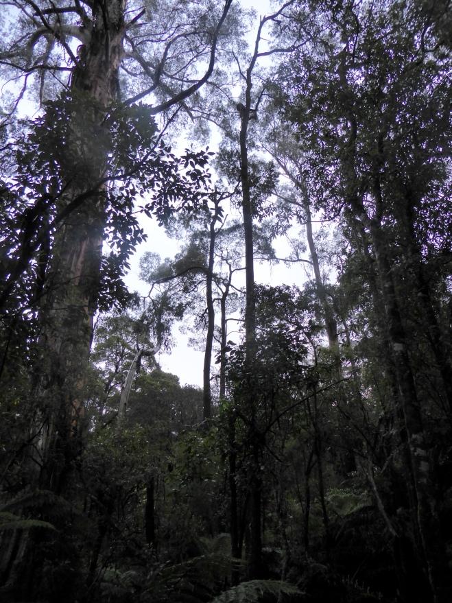 Otway Temperate Rainforest