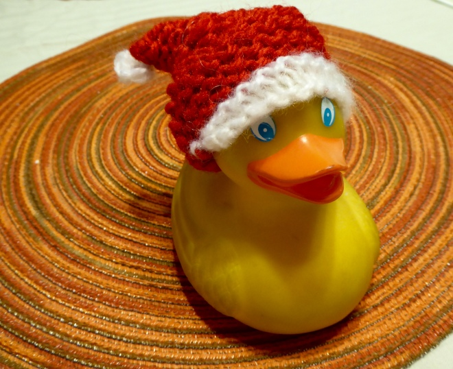 Zeb the Duck with a new Christmas hat