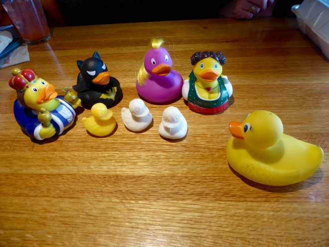 Ms. Ducky brought some friends home to Colorado