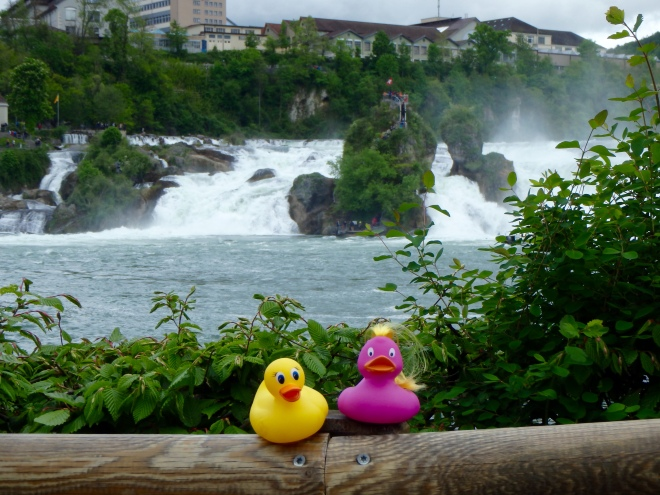 Ms. Ducky and friend at Rhine Falls