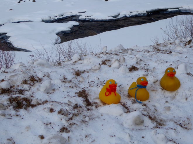 JB Duck, Soapy Smith Duck and Zeb the Duck in the snow by the river