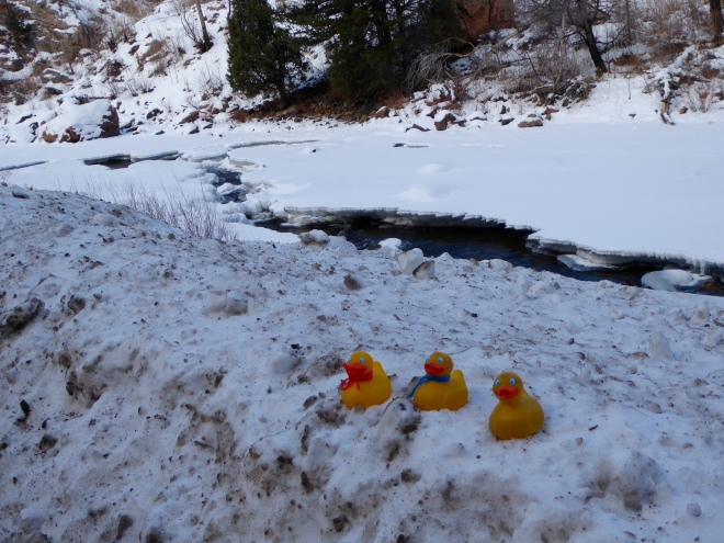 JB Duck, Soapy Smith Duck and Zeb the Duck by the Poudre River