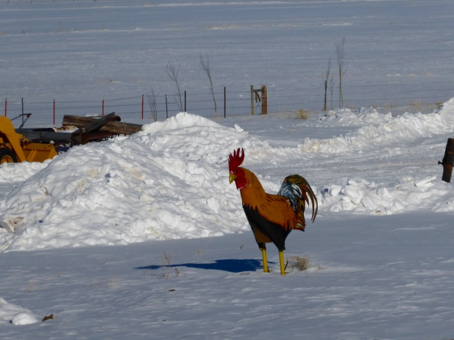 Great Rooster