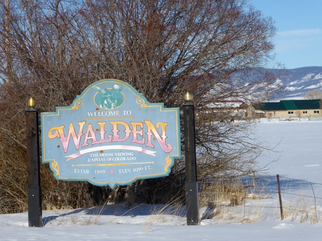Walden is the moose viewing capital of Colorado