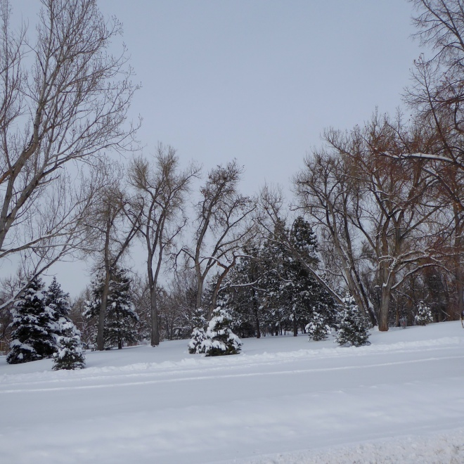 Park with new snow