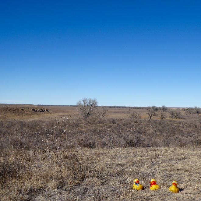 Open prairie of camp and battlefield