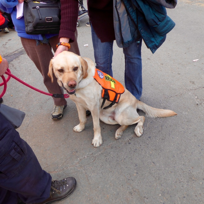 Larimer County Search and Rescue Dog