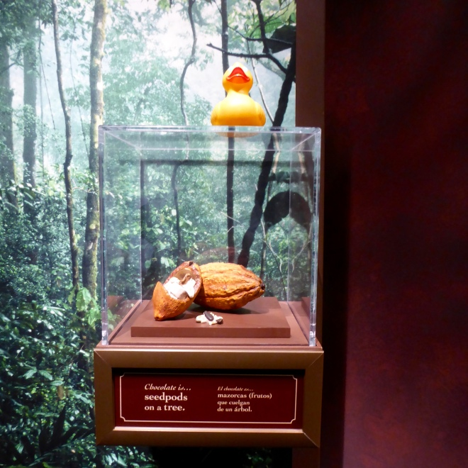 Cacao seedpod