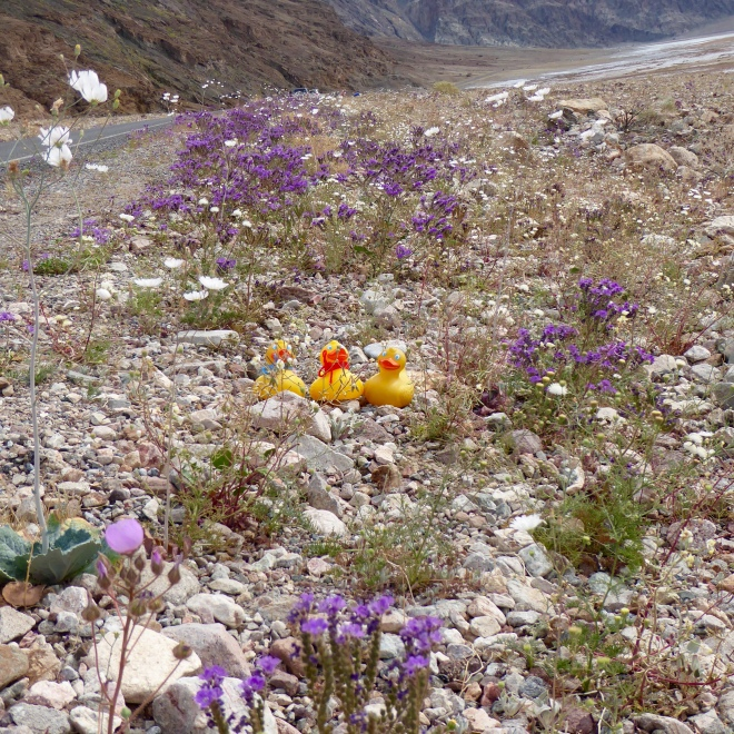 A few wildflowers by the road