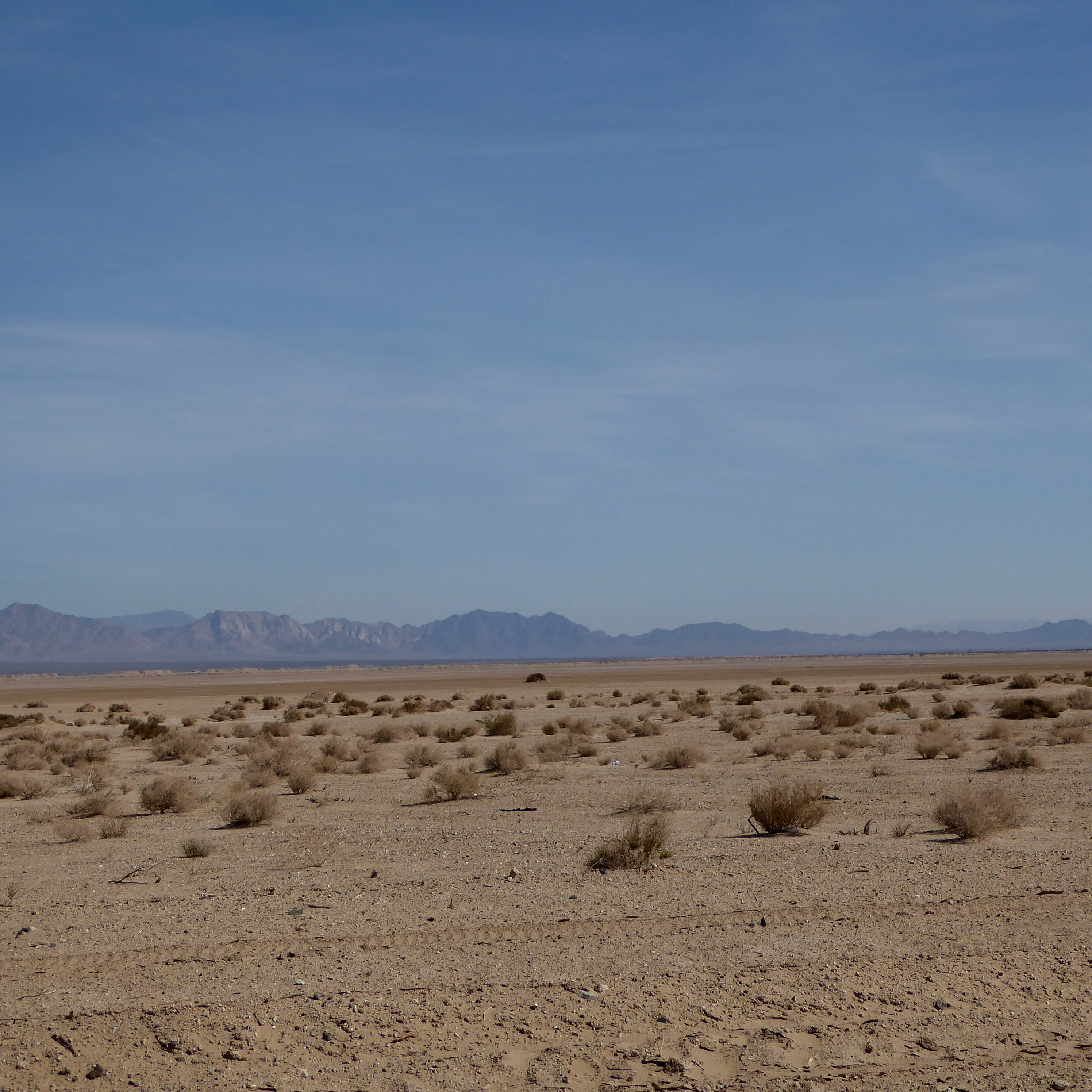 The Colorado Traveling Ducks Visit the Mojave Desert ...