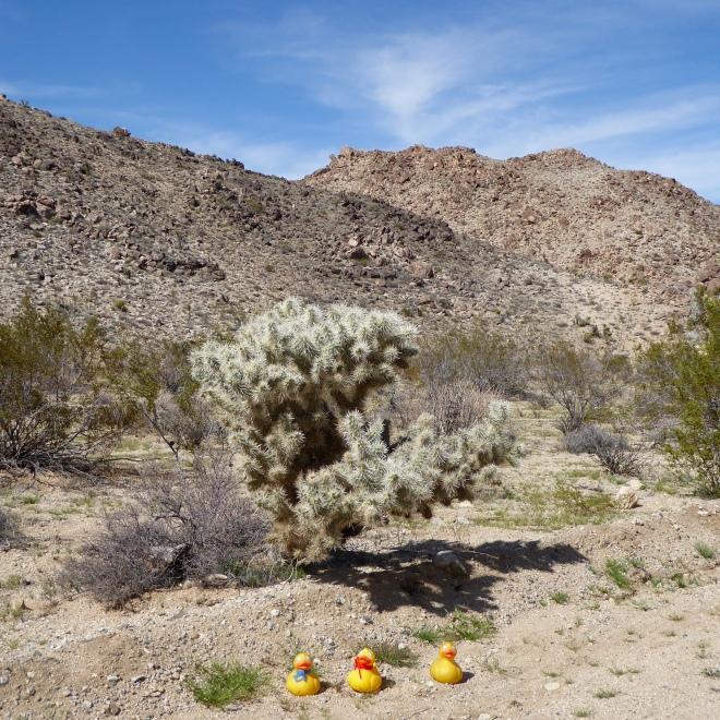 A silver color desert plant